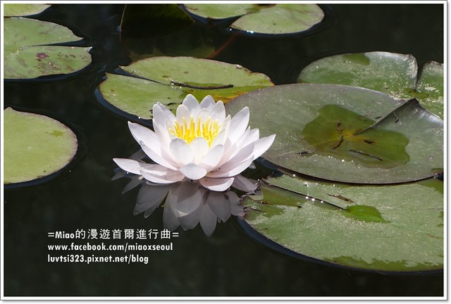 벽초지문화수목원23