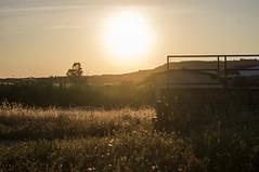 Climb Far Away (RP Frame) Tags: sardegna park sunset sun tree green sunshine yellow climb tramonto sardinia away sole albero far colline selegas