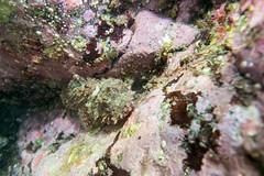 20150606-DSC_8466.jpg (d3_plus) Tags: street sea fish nature japan walking tokyo scenery underwater fine sightseeing sunny diving daily snorkeling freediving    kanagawa hayama     dailyphoto  j4  thesedays  waterproofcase skindiving      nikon1  1030mm shibasakibeach  1  nikon1j4 1nikkorvr1030mmf3556pdzoom  nikonwpn3 wpn3