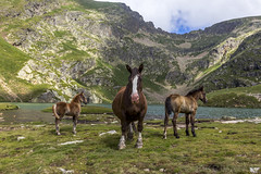 Estany de Cabanasorda, Principat d'Andorra (kike.matas) Tags: canoneos6d kikematas canonef1635f28liiusm estanydecabanasorda canillo andorra andorre principatdandorra pirineos paisaje lago caballos montaas nature nubes agua animales canon lightroom4