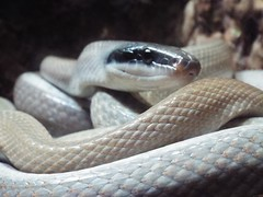 DSCF0161 (Stonehenge 68) Tags: zoo birmingham snake alabama lizard plantation antebellum birminghamzoo arlingtonhouse