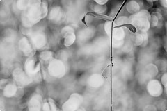 A small world around us. (HaRsH- beyond the lens On || OFF) Tags: photography perspectves blackandwhite black india canon canon6d lenses smallworld monsoon nature finest harshshahphotography bokeh