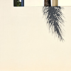 (SteffenTuck) Tags: steffentuck outdoor minimal urban shadow palm frond garden abstract fence offwhite pale edge