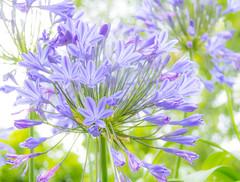 Flower (Infomastern) Tags: lund flower blomma botanicgarden geolocation botaniskatrdgrden geocity camera:make=canon exif:make=canon exif:focallength=50mm geocountry geostate exif:lens=efs18200mmf3556is exif:aperture=50 exif:isospeed=100 camera:model=canoneos760d exif:model=canoneos760d