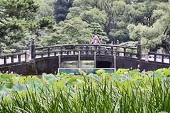 Tsurumai Park , Nagoya City ,Japan . (marcelo.nakazaki) Tags: park city flowers parque cidade lake flores tree japan arquitetura lago asia lotus postcard ponte nagoya arvores japon aichiken serenidade cartaopostal