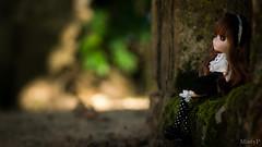 Wonderland light~ (MintyP.) Tags: pullip shinku 2006 rozen maiden traumend jun planning kotoricusto photography doll mntyp sony nex 6
