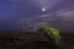 Survive (Ch3micals) Tags: landscape luna arbol alicante nocturna mar mediterraneo