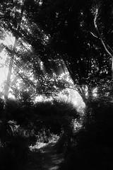 Un lugar misterioso (Sersio_Photographer) Tags: corua del conde fotografodecoruadelconde fotos con vaselina