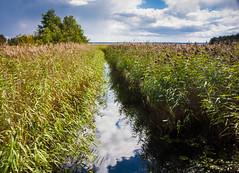 IMG_1107-1 (Andre56154) Tags: schweden sweden sverige vnern see lake wasser water ufer shore schilf reed himmel sky wolken clouds