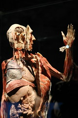 Inside and Out (smileyLife) Tags: nature animals museum out body ottawa chinese human anatomy inside humans organs donated plastination organisms