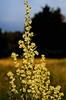 LADYBIRD (Simon R Brook) Tags: flowers summer nikon ladybird 2870mmf3545d middlesex hillingdon pinn yiewsley d7000 simonrbrook