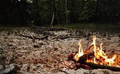 Deep in the woods ...2  .. a home create (CB-Photos) Tags: wood danger fire gold sand forrest flames heat alpha feuer wald slt a58 deem berleben alpne surival