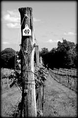49 (pjpink) Tags: blackandwhite bw monochrome virginia spring may vine row winery vineyards 49 charlottesville 2015 pjpink michaelshaps