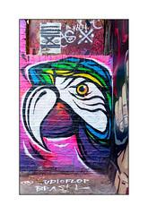 Graffiti (Studio FLOP), East London, England. (Joseph O'Malley64) Tags: uk greatbritain brazil england streetart london wall brasil concrete graffiti mural paint britain render parrot spray litter alleyway british walls cans aerosol pointing macaw brickwork eastend eastlondon wallmural muralists woodenpanel studiofploflop