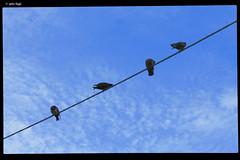 IMG_6264 (anto-logic) Tags: cielo sky animali animals friends amici animaliamici animalfriends piccioni pidgeons uccelli birds volatili filo rope estate summer luglio july piante fiori violet viola blu blue gialli plants yellow flowers flora margherita daisy primavera spring domenica passeggiata walking walk livorno toscana aria aperta libert natura nature libero bello puntodivista profonditdicampo fence gardens green outdoors liberty lovely free pointofview depthoffield pov focus bokeh relax relaxed gorgeous nice pretty perfect eos canon