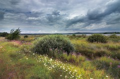 After the Rain (alexander_mrstone) Tags: contrast hd wallpaper landscape field sky wind sunshine clouds summer rain flowers lviv lake weather saturate hdr beautyful