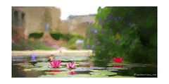 MSJ Water Lilies (Emet Martinez Photography) Tags: emetmartinezphotography emetmartinez emetmartinezcom msjc missionsanjuancapistrano waterlilies flowers fountain reflection topazimpression impressionist impressionism vincentvangoghbrushstrokes photopainting photographydigital photoartwork topazsoftware