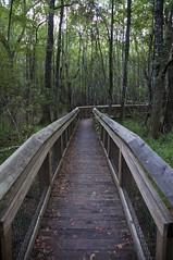 Apalachicola Nat'l Forest, Florida (fisherbray) Tags: usa nikon unitedstates sink hiking hike nationalforest trail tallahassee sinkhole apalachicola drysink leonsinks usforestservice apalachicolanationalforest leoncounty d5000 wetsink sinkholetrail fisherbray geologicalarea