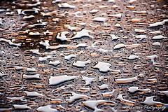 after the rain (KWinters Photography) Tags: water droplets rain glass colors closeup colorado flickr nikon nikondsl d7200 wasser regen tropfen