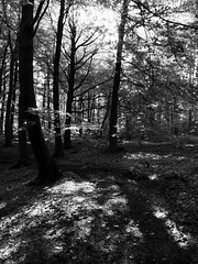 Week 24 (Jamie Goldsworthy) Tags: nottingham blackandwhite composition woodland photography countryside photo woods moody perspective potd dslr amateur nottinghamshire photooftheday picoftheday htc week24 52weeks amateurphotographer lovephotography mobilephotography project52 52weekproject htc10