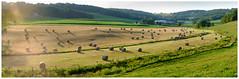 Hay bales (paulduke1) Tags: panorama velvia xpro2 raw