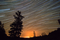 A night with the Perseids (Neferkheperure) Tags: night star startrail perseids outdoor sky meteors forest tree light pollution trails dark tripod wide angle