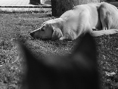 IMG_9649.JPG (esintu) Tags: dog cat feral street stray park sleep istanbul