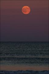 2016-07-19 Moonrise at Beach (178) (Paul-W) Tags: ocean blue sunset sky seagulls water clouds sand surf waves purple wells moonrise ogunquit 2016 northogunquitbeach