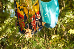 Grasses (joeldinda) Tags: campsite towel underbrush harrisvillestatepark 2016 3235 august clothesline yardstuff clotheslinepole harrisville michigan alconacounty sooc