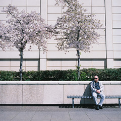 Mall Respite (joshuacolephoto) Tags: roll film rollfilm 120 medium format 66 6x6 square mf lincoln bristol holiday travel negative space man sitting shadow blossom lines bench candid street