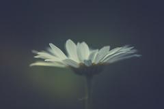 in the light (shane holsclaw) Tags: flower flowerpetals petals light green nature macro