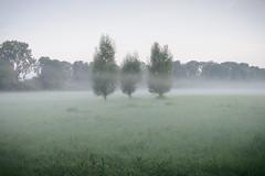 Nebel ber den Feldern (G_Albrecht) Tags: agrar baum bodennebel landschaft morgennebel nebel pflanze umwelt wetter