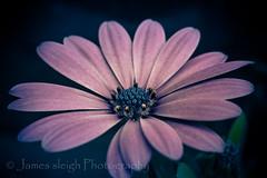 Fuji x-t10 carl zeiss (Jasrmcf) Tags: fuji fujinon fujixt10 fujimacro macro carlzeiss flower flowers bokeh bokehlicious bokehgraph 50mm purple beautiful smooth blur