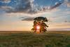 Paradise (CreArtPhoto.ro) Tags: wheat heaven nori earth frumusani clouds landegrau sun romania tree beautiful grau cer sunrays ripped paradise copac