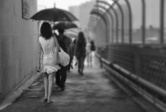 Walking in the rain (missgeok) Tags: walkingintherain rain sydney sydneyharbourbridge umbrella umbrellas people candid streetshot bnw blackandwhite raininthecity australia focus lady framing composition nocolour mood atmosphere streetscene bw