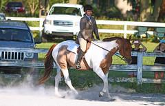IMG_2551-01 (SJH Foto) Tags: horse show hunter jumper class girls teenage teen riders action shot tweens