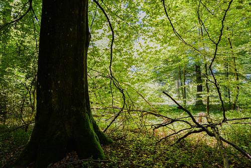 Foret Freylange, Belgium