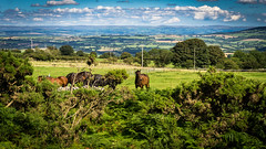 Horses in a field on Bodmin Moor (David Lea Kenney) Tags: moor horse horses cornwall landscape