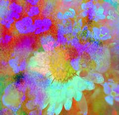 Vivid Meadow Flower Bouquet (virtually_supine) Tags: texture collage photomanipulation vividcolour montage daisy layers abstraction impressionistic hss digitalartwork compositeimage meadowflowers sliderssunday photoshopelements9 etvastyle~blindpigspeakeasychallengeno34 abstractedpoppies