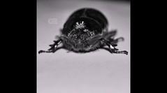 #فيديو #صور #تصويري #ماكرو #حشرات #سيارات #حيوانات #اكل #كفي #قهوة_ساخنة  #قهوة_الصباح #طبيعة#video #photos #macro #cars #hdr #nature #coffee #tea #شاي #شاهي #food #coffeetime #timetea #birds #insect #bug#ksa #bw (photography AbdullahAlSaeed) Tags: bw food macro cars nature coffee birds bug insect video tea photos hdr صور شاي ksa coffeetime حيوانات سيارات تصويري طبيعة ماكرو اكل فيديو كفي حشرات شاهي timetea قهوةالصباح قهوةساخنة