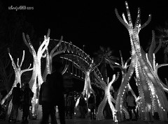 Through a forest of electric trees (9/36 Sydney Harbour Bridge) (astrogirl969) Tags: vivid 2015 monochrome blackandwhite filmsimulation adobecameraraw acr tree light outdoor night people silhouette contrast festival monochromeredfilter iwps fujifilmxf1855f284r wideangle fujifilm postprocessed sydneyharbourbridge 1500views xe1