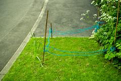 Fence (cracurs) Tags: grass 35mm canon fence m42 flektogon postprocess manualfocus lightroom preset carlzeissjena primelens manuallens lightroom3 35mm24 canon5dmk1