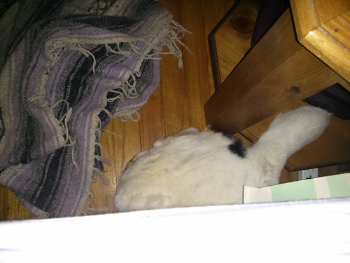 Blue Stuck Under the Bed Again