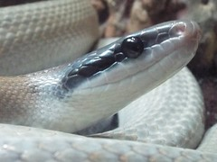 DSCF0165 (Stonehenge 68) Tags: zoo birmingham snake alabama lizard plantation antebellum birminghamzoo arlingtonhouse