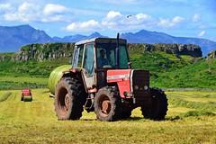 (Zak355) Tags: tractor scotland farm farming scottish bute rothesay isleofbute masseyferguson