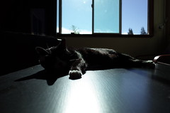 Roland 3 (panfriedcharlie) Tags: roland cat sun basking table grii