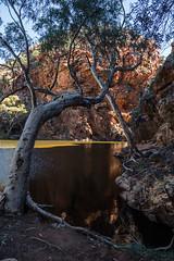 MacDonnell Ranges Ellery Creek Northern Territory-3