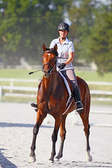 IMG_2537 (SJH Foto) Tags: horse show rider action shot dressage wtc walk trot canter teens teenagers girls