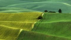 palouse field (3dRabbit) Tags: palouse wa field wheat color morning sungjinahn canon 135mm pattern composition food
