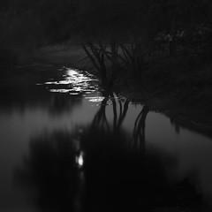Moonlight (Thomas Pohlig) Tags: trees light blackandwhite moon lake water monochrome night landscape newjersey shadows fineart moonrise moonlight series